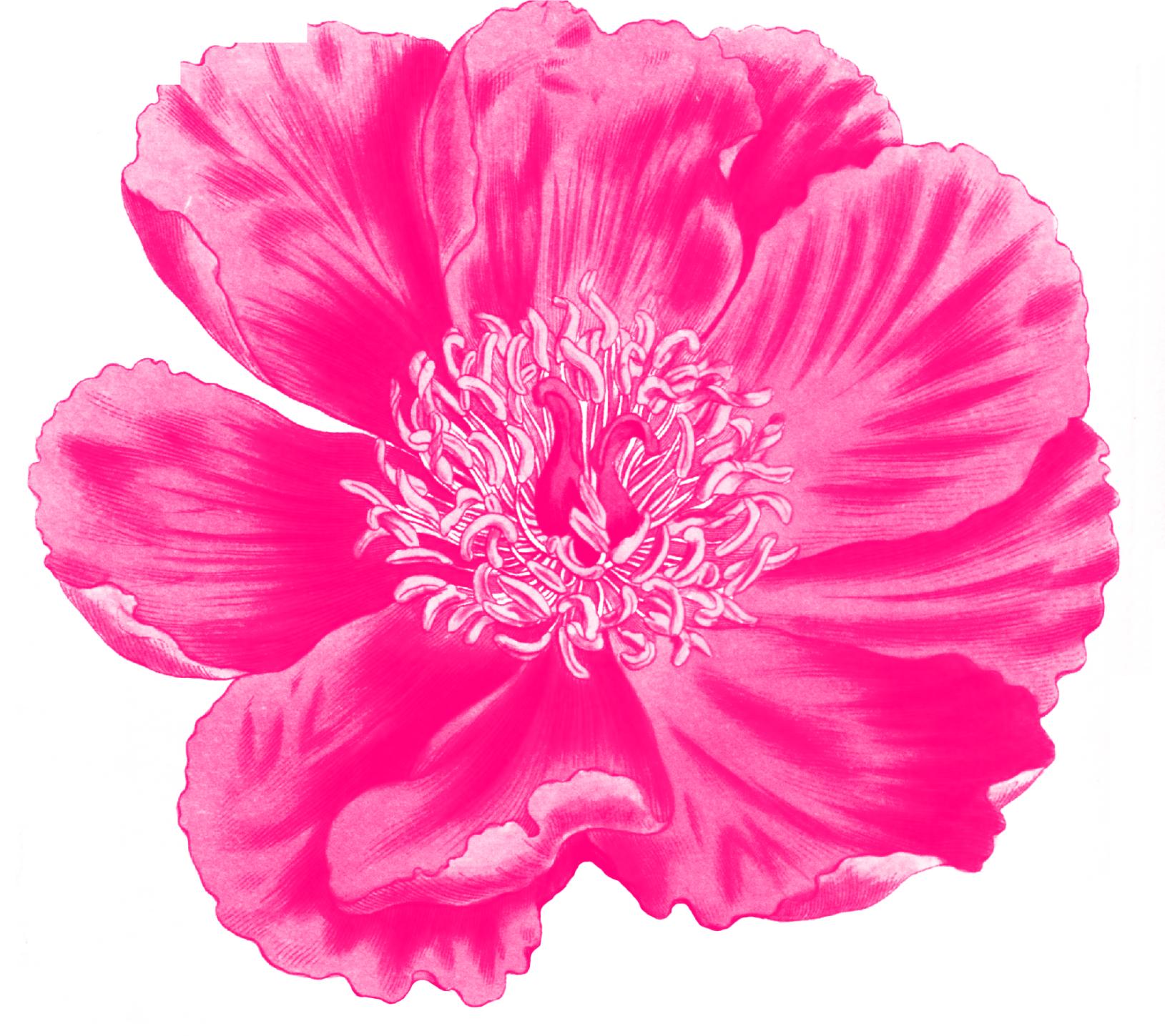 ptite_fleur